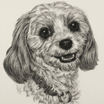 Dog Portrait Art Drawing