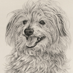 Canine Portrait Charcoal on Paper Artwork