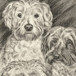 Poodles Portrait Art Drawing