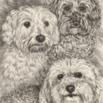 Poodles Dog Portrait Art Drawing