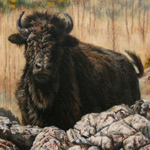 """Wildlife Art Bison Image"""
