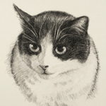 Cat Portrait Art Drawing