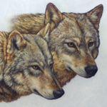 """Wildlife Art Wolf Painting"""