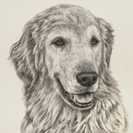 Custom Golden Retriever Dog Portrait Artwork