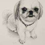 Fine Art Fuzzy Dog Portrait Drawing