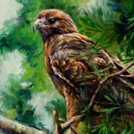 """Wildlife Art Bird Raptor Tree"""