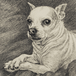 Chihuahua Dog Portrait Art