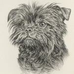 Fine Art Dog Affenpinscher Pet Portrait Drawing